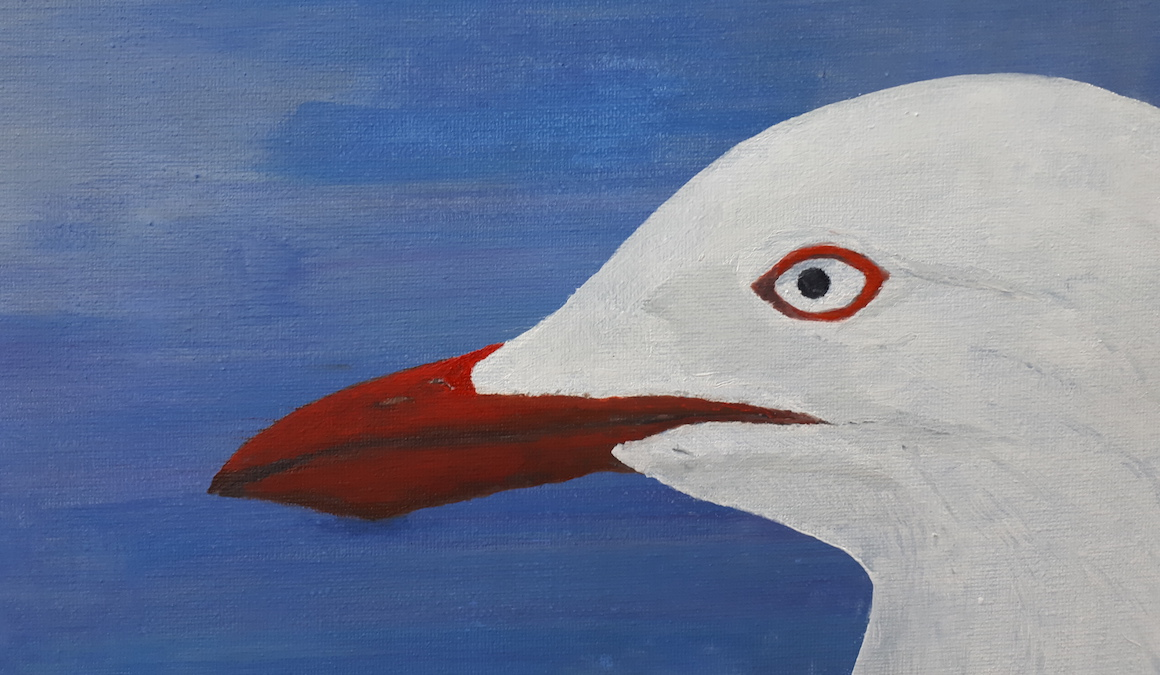 Silver Gull Finds New Nest